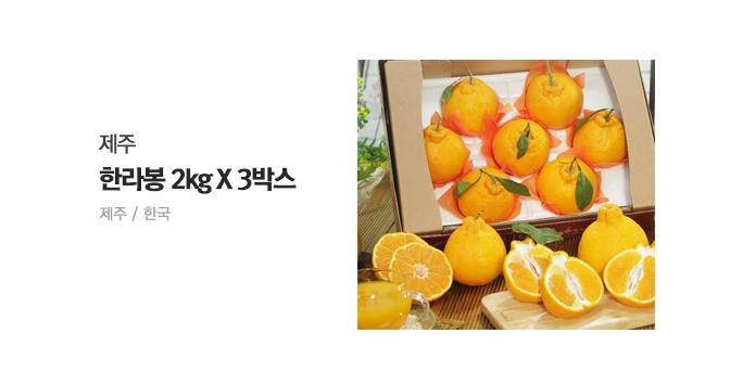제주 한라봉 2kg X 3박스