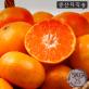 제주표선농협 노지감귤 5kg 2S사이즈